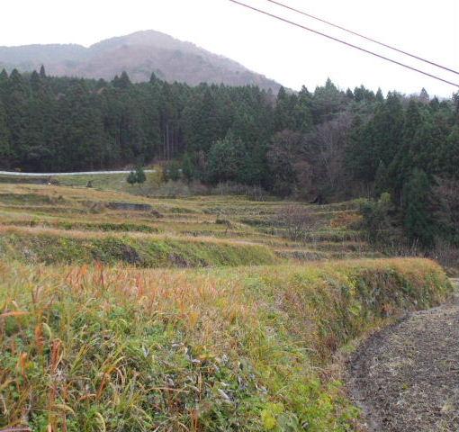 091206旧・春日村、貝原棚田③1.JPG