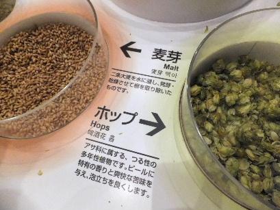 130622キリンビアパーク名古屋07、原料(麦芽とホップ).JPG