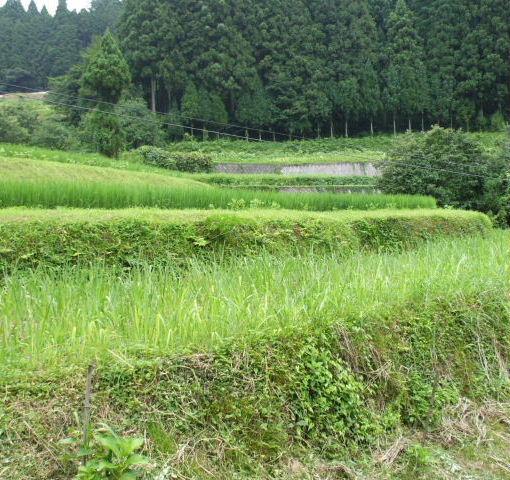 090731貝原棚田③1.JPG